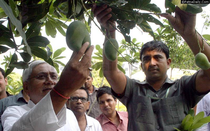 Nitish Kumar checking out the mangoes grown in the Chief Minister's garden at 1 Anne Marg. (File photo from 2013)