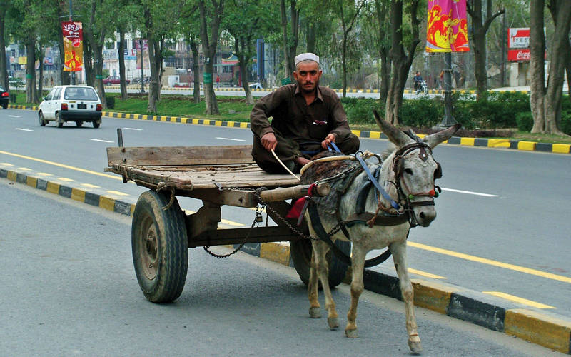 Donkey cart in Pakistan.