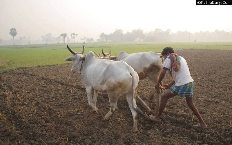 agriculture is the backbone of india