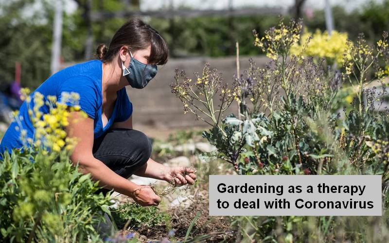 Gardening during the time of Corona.