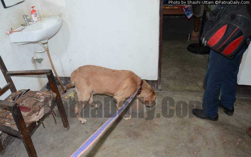 A police dog sniffing for scents left by the criminal in the double homicide case in Danapur on Saturday.